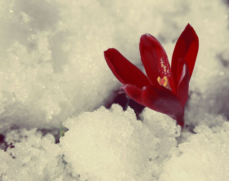 crimson-snow-michael-woroniecki-blog-2016